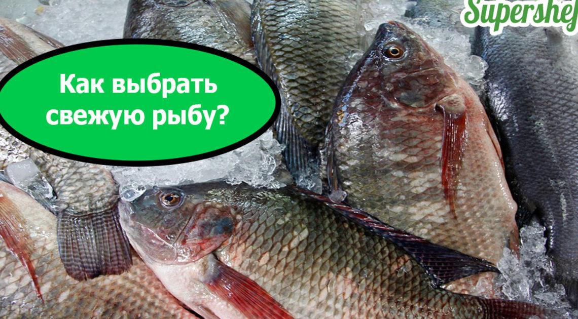 Как выбрать качественную и вкусную рыбу