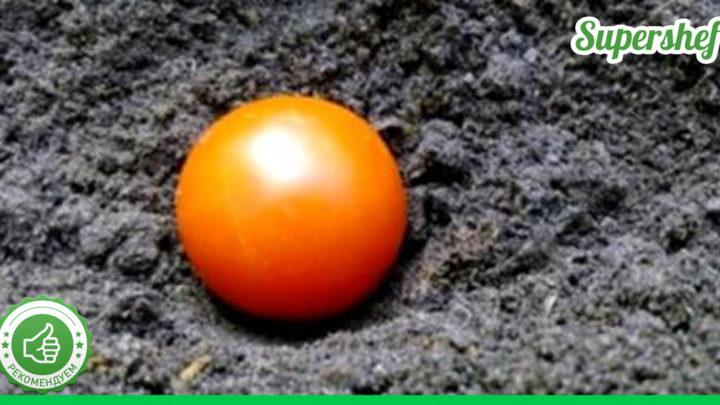 Осенью закопала целый помидор и что в итоге получилось