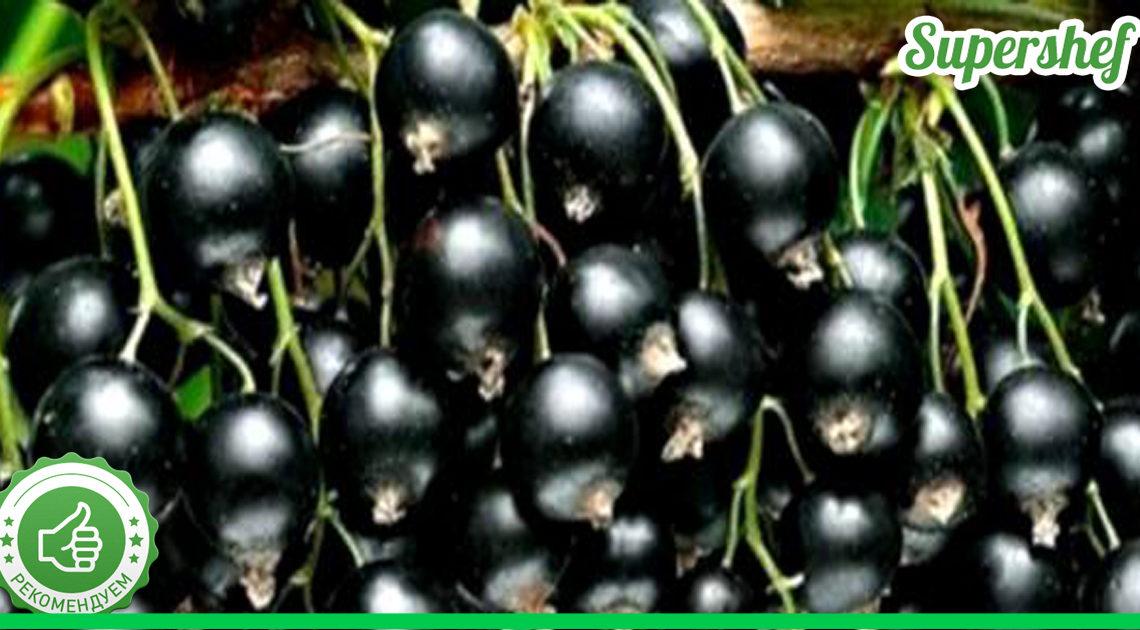 Почему ежегодная обрезка кустов черной смородины приводит к повышенному урожаю в следующем году