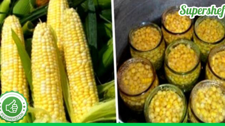 Заготавливаем кукурузу правильно