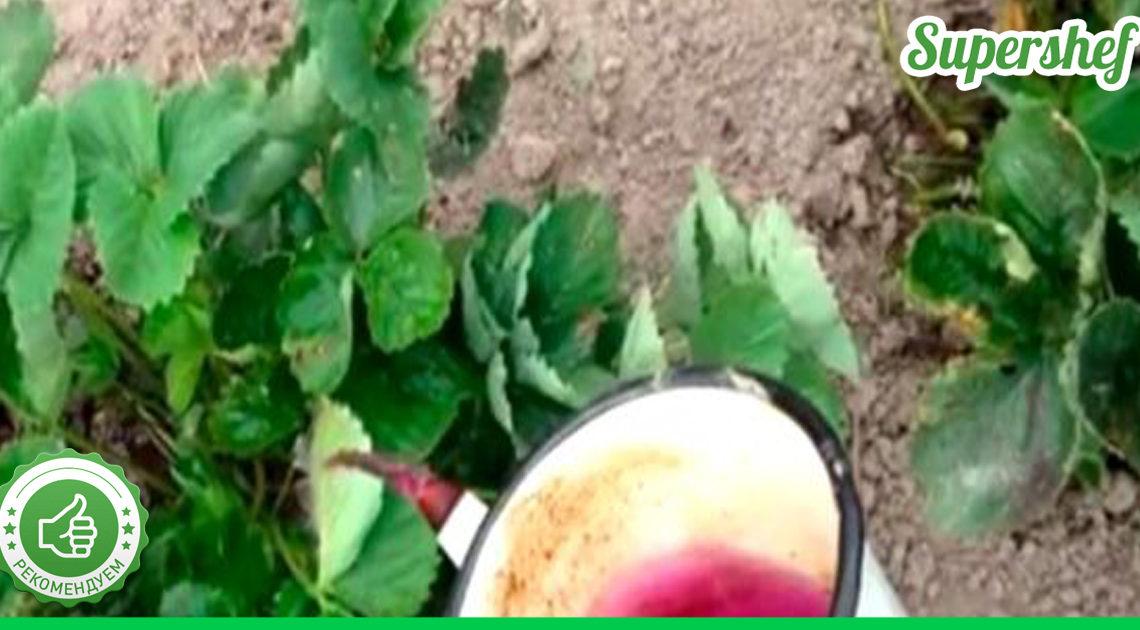 Чем обрабатывать клубнику после обрезки листьев — дельный совет, проверенный временем