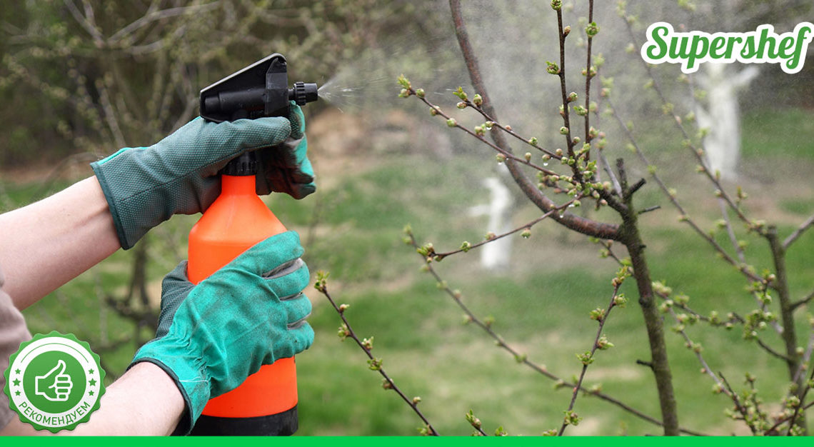 Метод обработки плодовых деревьев от всех «болезней»