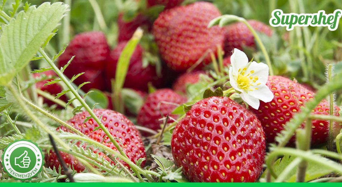 Чем подкормить клубнику, чтоб собрать огромный урожай