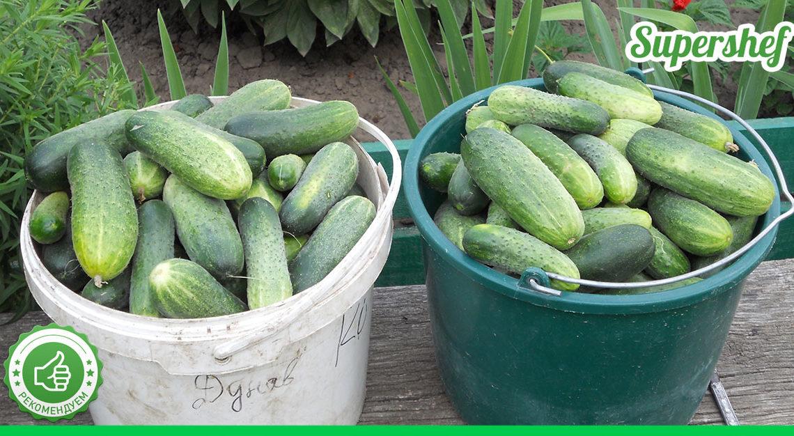 Лучшие удобрения для хорошего урожая огурцов