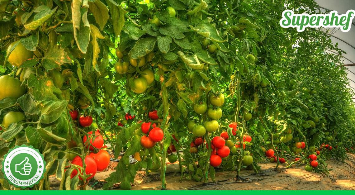 Чудодейственный прикорм для помидоров: нужен всего один стакан на ведро