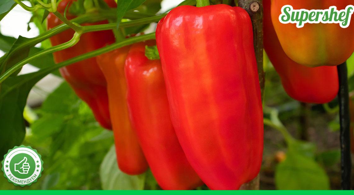 Секреты богатого урожая болгарского перца
