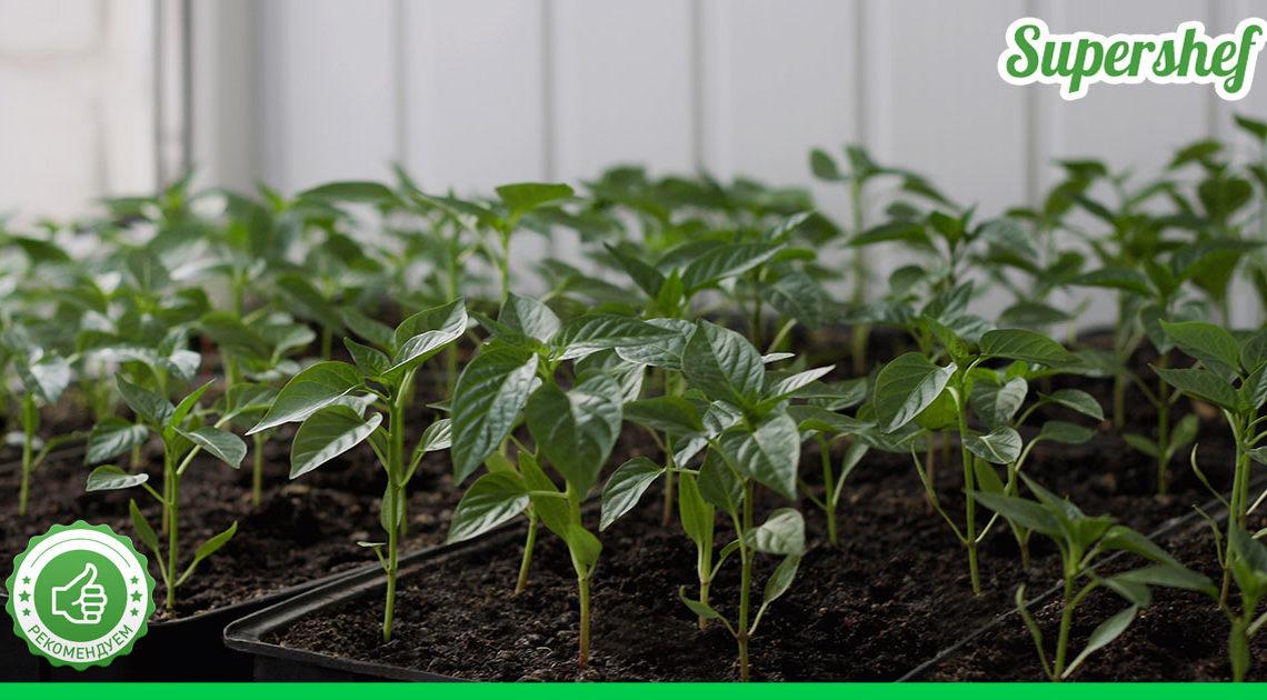 7 строгих «НЕТ» для рассады помидоров