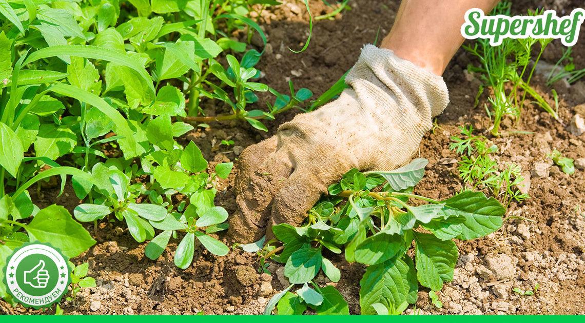 Народный метод борьбы с сорняками
