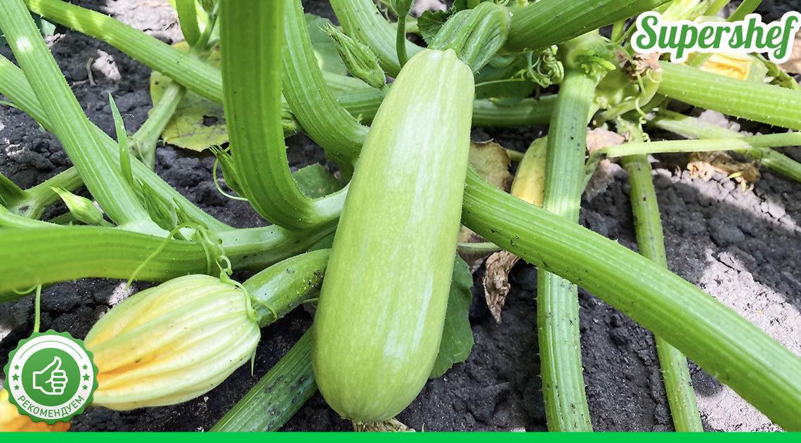 Опытные огородники поделились секретами быстрого роста кабачков