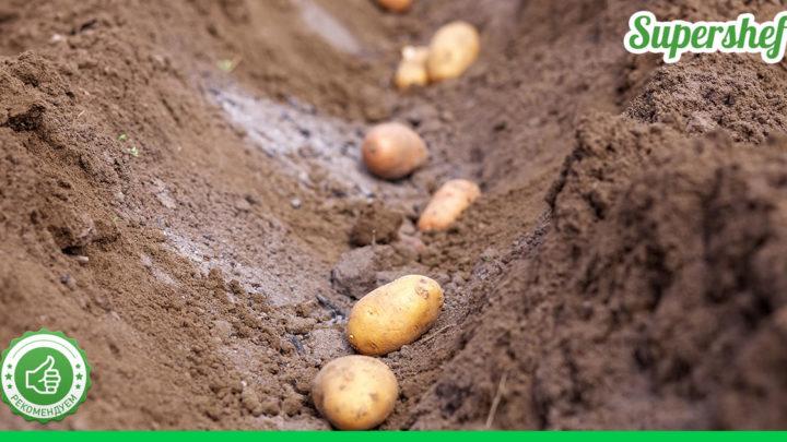 Как подготовить грядки под картошку в осенний период
